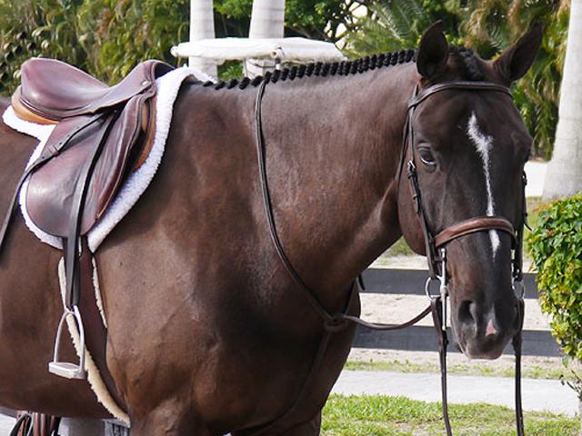 Equestrian property florida plam beach wellington palm city